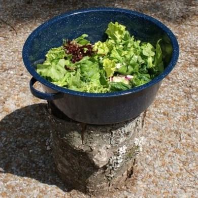 csa salad, baby greens, washtubs make great salad bowls