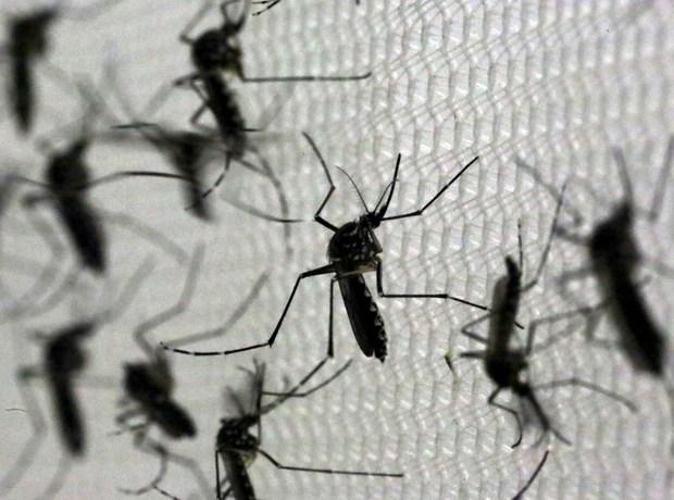 SC tem 15 casos confirmados de dengue e 5 de zika vírus