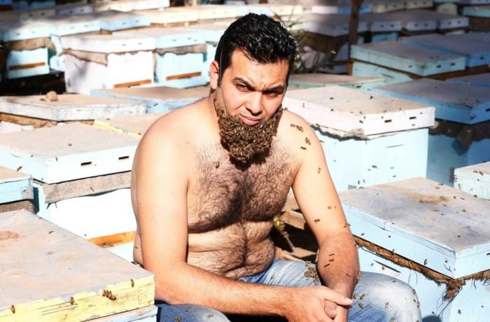 Sem proteção, egípcio exibe 'barba de abelhas'