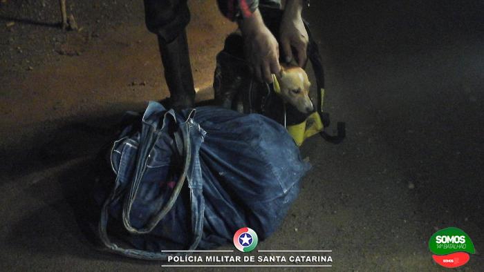 MAUS TRATOS: Motociclista é flagrado transportando dois cães em bolsas fechadas