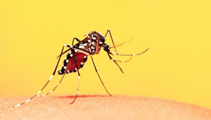 Transmissão da doença se dá somente através do mosquito Aedes Aegypti