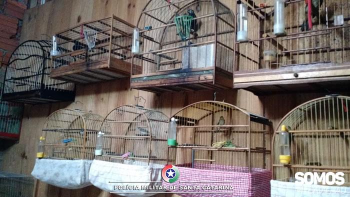 Pássaros em situação irregular eram mantidos em gaiolas l Foto Polícia Militar/Divulgação