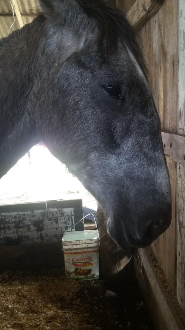Cavalo 'Lobisomem' passa por tratamento em casa — Foto: Patrícia Alves/Divulgação
