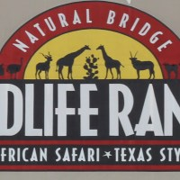 Natural Bridge Wildlife Ranch Transports You to Africa