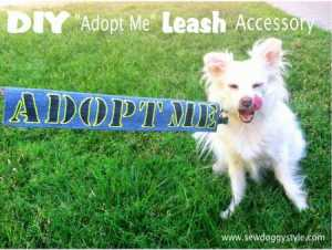 diy leash accessory