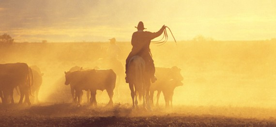 God herding cows