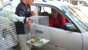 man-selling-parakeet3_peru