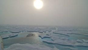 arctic-ice