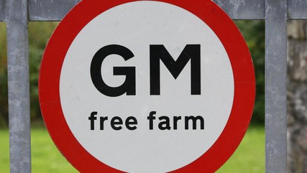 GMO-Free_emptyhighway