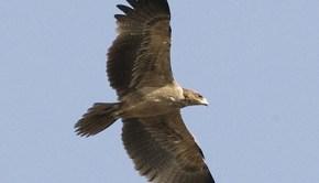eagle-lip-kee