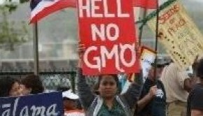 hawaii-hell-no-gmo
