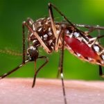 zika virus spread by mosquitos, made worse by climate change