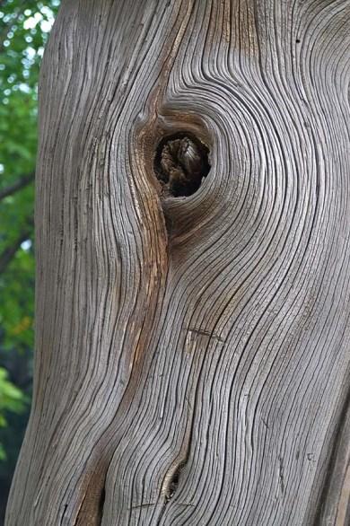 ...oraz piękne, kameralne arboretum. Ciekawostka: na jednym z drzew podczas oblężenia Zakazanego Miasta powiesił się cesarz Chong Zhen.