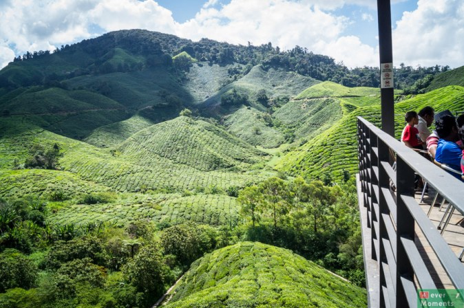 Cameron Highlands-34