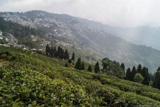Darjeeling-64
