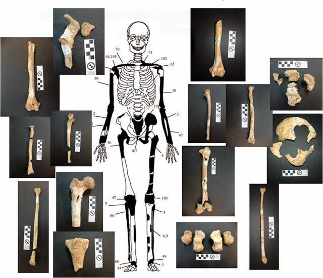 Representación y restos del 2º esqueleto encontrado, un hombre de entre 35 y 45 años.