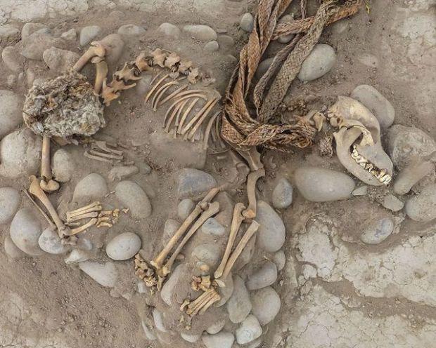 Restos de uno de los peros sacrificados en el enterramiento Ychsma
