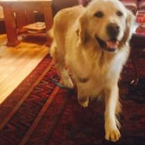 Therapy dog McIntosh pays a visit