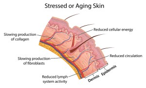 Stressed or aging skin before red light therapy.
