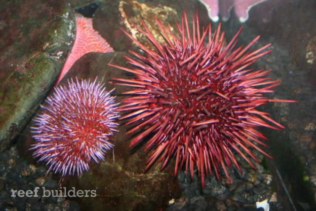 pictorial walkthrough of the Denver Downtown Aquarium