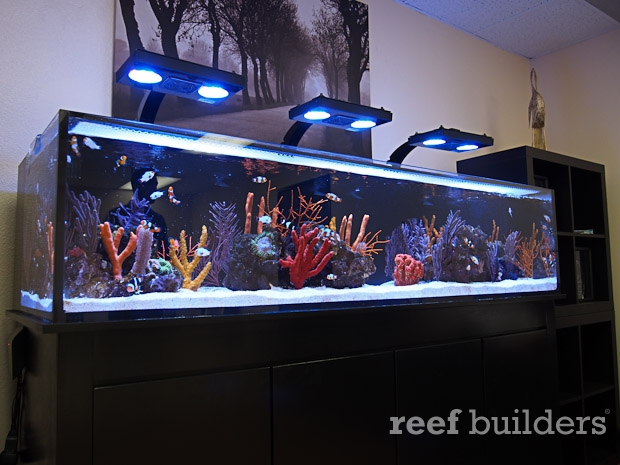 location for the first ever unboxing of the Nuvo Shallow Reef aquarium