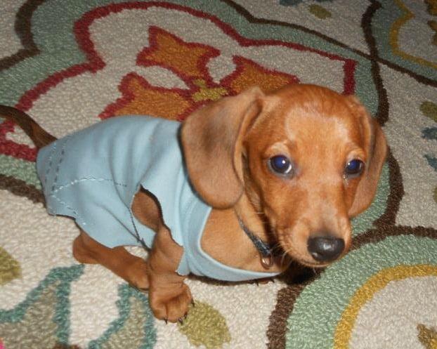 A Warm & Cozy Puppy!  :)