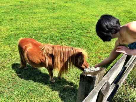 Didja know I used to raise miniature horses?