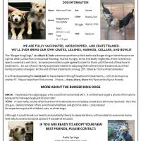 Dogs for Adoption - Snow Coast Real Estate
