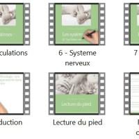 Création d'une formation en réflexologie podale