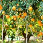 federacion citrus
