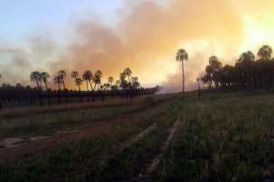 incendio palmar 2