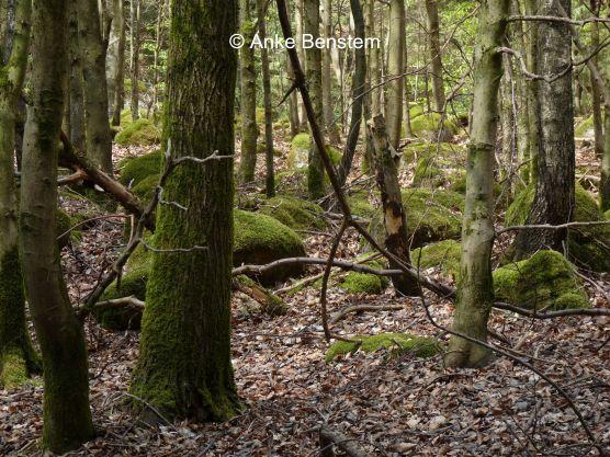 Moosige Waldlandschaft