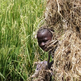 A boy shield himself from the sun in a rice field waiting for birds. The children face scores of extreme challenges while working at the rice fields which are swampy and flooded. [Photo: Tom Otieno /Courtesy ]