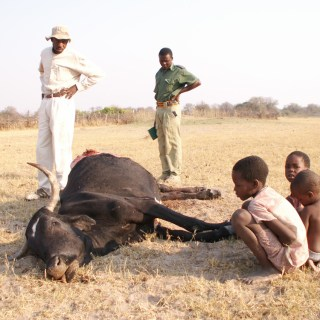 Children and on-lookers looking at a cow that was attacked by a wild animal. [Picture : Courtesy]