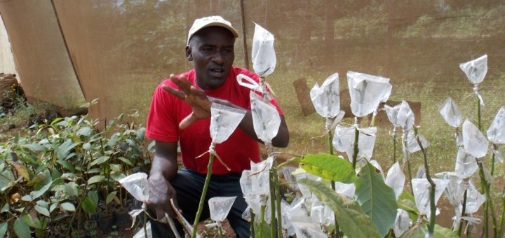 Samson Ochieng explains how to graft avocadoes at a green house in their group demonstration farm in God Jope.