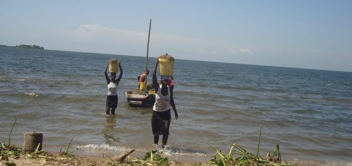 Women harvest sand in Usenge, Siaya County. Scarcity of fish as a result of increased hyacinth in Lake Victoria has pushed fish monger to other activities.Picture:Henry Owino