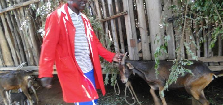 Former Chief Maurice Aringo attending to animals in his farm. He beats all odds and became the MCA West Sakwa Ward, Bondo constituency. Picture:Omondi Gwengi