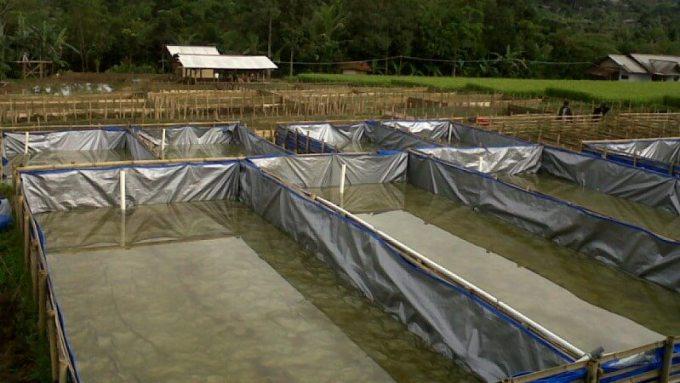 kolam-lele-sangkuriang