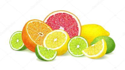 depositphotos_119452208-stock-photo-hand-drawn-illustration-of-citrus