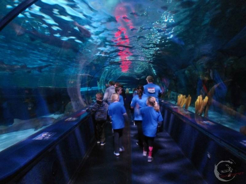 Ripleys Shark Tank