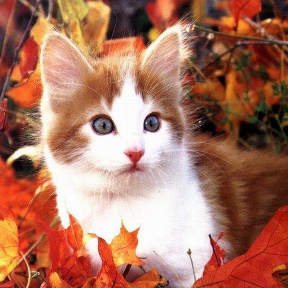 Sérénade d'automne