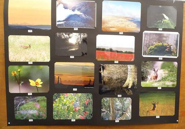 07 concours photo couleur (12)