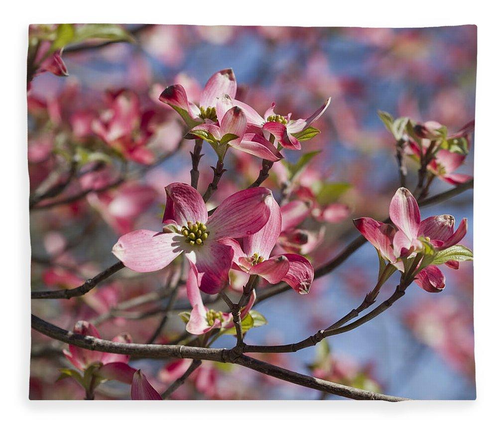 Fullsize Of Pink Dogwood Tree