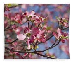 Small Of Pink Dogwood Tree