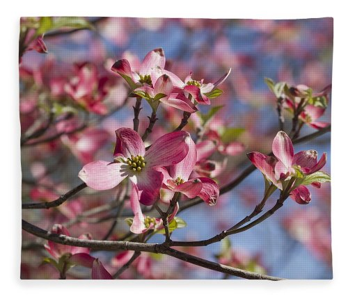 Medium Of Pink Dogwood Tree