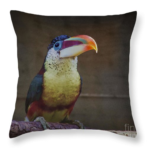 Curl crested Aracari Throw Pillow for Sale by TN Fairey Curl crested Aracari Throw Pillow featuring the photograph Curl crested  Aracari by TN Fairey