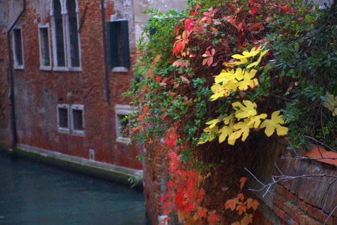 Venice. Leaves