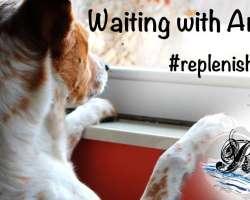 Replenishfest Anticipation