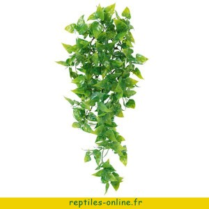 trixie-plante-de-la-jungle-phyllo