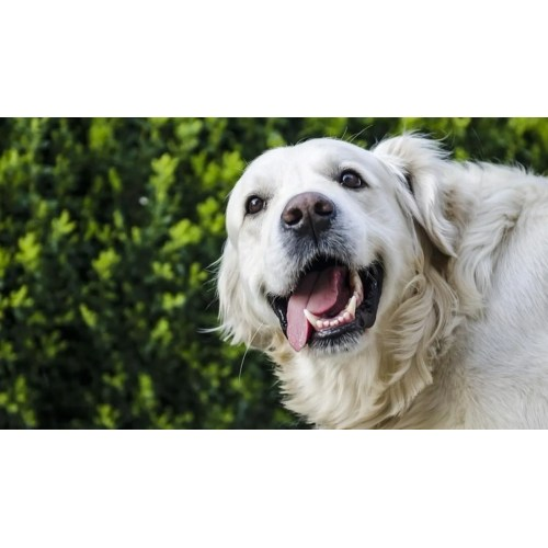 Medium Crop Of Rent A Dog